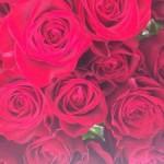 バレンタインの赤バラ