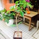 観葉植物も少しずつ増えてます(^^)鉢の植え替えもご提案させて頂いております!