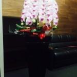 法人様からの御依頼。様々な胡蝶蘭をお贈りさせて頂いております。